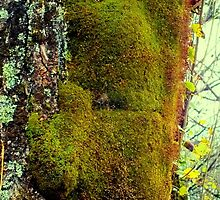 Moss, Buried Village, Rotorua New Zealand by sandysartstudio