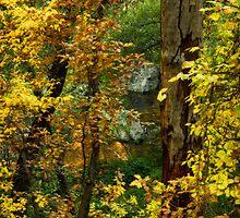 Autumn Gold  by Saija  Lehtonen