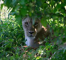African Wildlife Calendar by Michael Knee