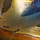 Ants in paradise by Celeste Mookherjee