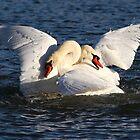 Swans by Alinka
