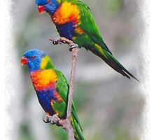 pair of happy parrots by STHogan