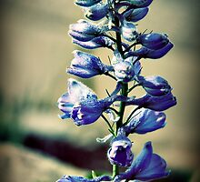 Little blue bells by Jazz08