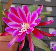 Cactus Flower by Rozalia Toth