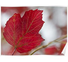 Red Points to Autumn Poster