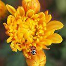 Ladybird. by John Sharp