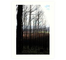 Post February 2009 Bushfires Victoria - Marysville July09 Art Print