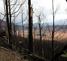 Post February 2009 Bushfires Victoria - Marysville July09 by OzNatureshots