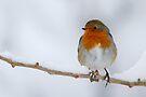 Winter Robin by Neil Bygrave (NATURELENS)