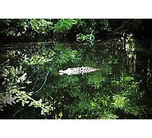 Alligator In The Middle Photographic Print