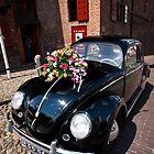 Wedding Beetle by Martin Pot
