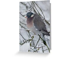 Winter Wood Pigeon Greeting Card