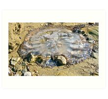 Stranded jellyfish at Port  Vincent Art Print