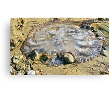 Stranded jellyfish at Port  Vincent Canvas Print