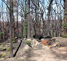 Post February 2009 Bushfires - west of Kinglake June09 by Emmy Silvius