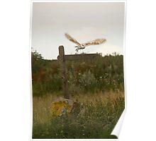 Barn owl on location. Poster