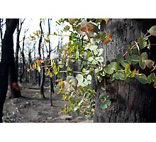 Post February 2009 Bushfires - west of Kinglake June09 Photographic Print