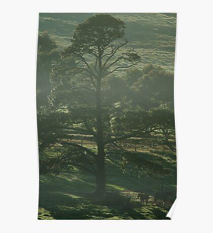 Early Morning Light, Romsey  Poster