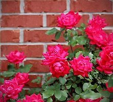 Antique Roses by Cynthia48