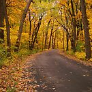 An Autumn Drive by Rosanne Jordan
