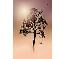 A TREE IN THE FOG Photographic Print