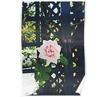 Rose Garden at the NY Botanical Gardens Poster
