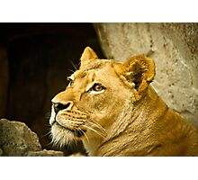 African Cats - 4   / Mother  Photographic Print