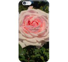 Rose Garden at the NY Botanical Gardens iPhone Case/Skin