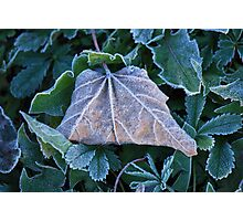 FROST COST Photographic Print