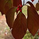 Autumn Dogwood-007 by WhiteOaksArt