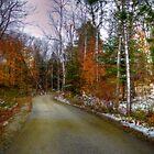 Seasons Change on Windrun Road by Monica M. Scanlan