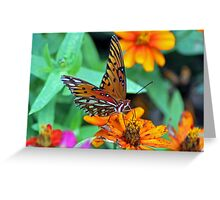 Monarch Butterfly Resting Greeting Card