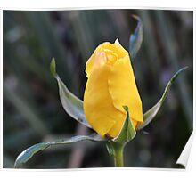 Yellow Rose Bud-007 Poster