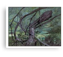 Fallen branch Canvas Print