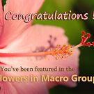 Flowers in Macro Banner by Leon Heyns