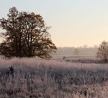 First frost, and tree in autumn colors by Antanas