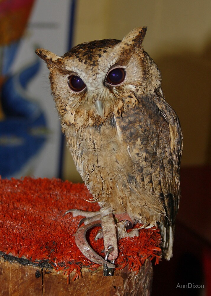 This is Flint the Little Owl by AnnDixon