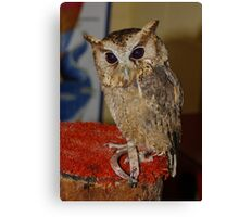 This is Flint the Little Owl Canvas Print