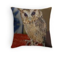 This is Flint the Little Owl Throw Pillow