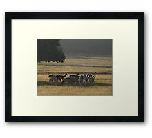 Dawn in Richmond Park, London Framed Print