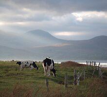 Dingle, Ireland by RuthBrooks