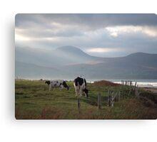 Dingle, Ireland Canvas Print