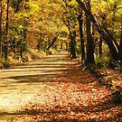 Fall in the Ozark Hills by David  Hughes