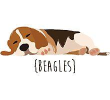 Beagles Photographic Print