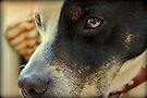Canine Concern by Astrid Ewing Photography