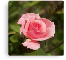 Queen Elizabeth Pink Canvas Print