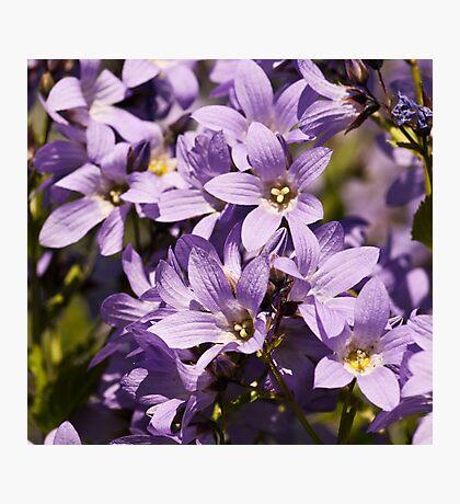 Mauve Blooms Photographic Print