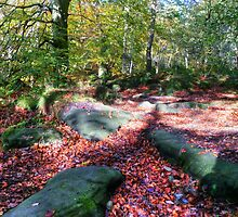 Padley Gorge by Elaine123