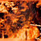 Spider Art by artbyjehf