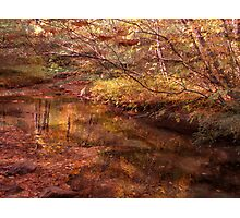 Golden Glade Photographic Print